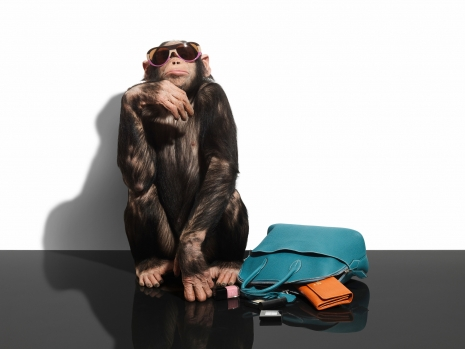 Armin Zogbaum Fashion Accessories Louis Vuitton Chimp